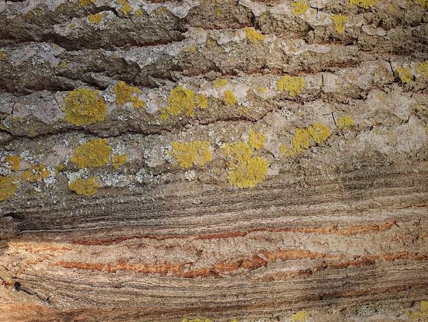 Naturalne tło starego drewna z bliska