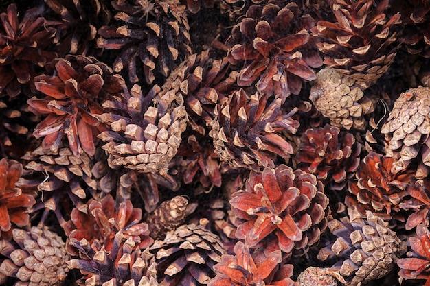 Naturalne tło suszonych małych pięknych kolorowych brązowych szyszek sosnowych leżących w bałaganie