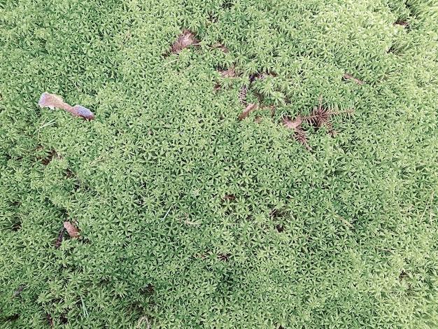 Naturalne tło z świeżym mchem i gałązkami. koncepcja tła, natura.