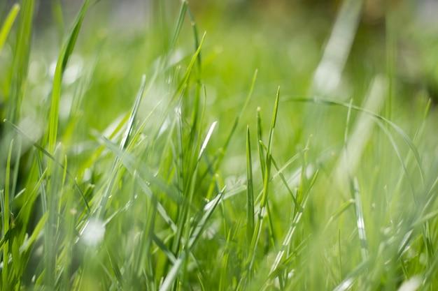 Naturalne tło zielona trawa z letnim słońcem podkreśla bokeh.