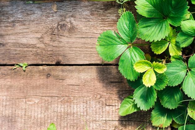 Naturalne tło. zielone liście truskawek rosną obok starych desek. prace ogrodowe. miejsce na tekst