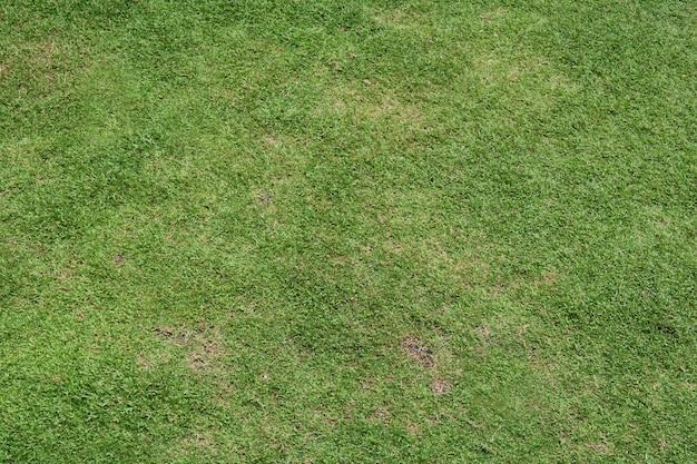 Naturalne tło zielonej trawy