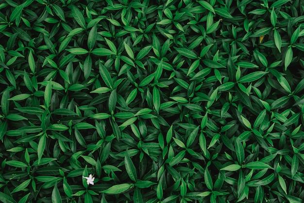 Naturalne tło zielonych liści z rocznika filtrem