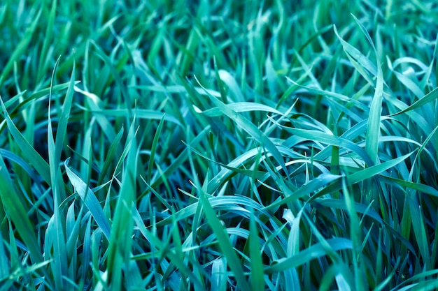 Naturalne Zielone Liście W Wiosennym Ogrodzie, Naturalne Letnie Liście Rośliny Do Wykorzystania Jako Tło Letnie Lub Tło Przyjazne Dla środowiska. Premium Zdjęcia
