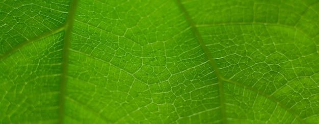 Naturalne zielone tło liścia wybierz konkretną ostrość