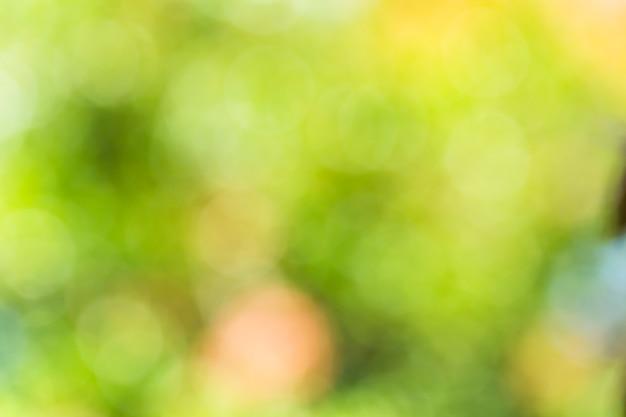 Naturalne zielone tło zamazane pole