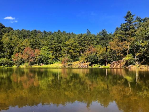 Naturalni japońskiego stylu drzewa las i stawu ogród przy chiang mai tajlandia.