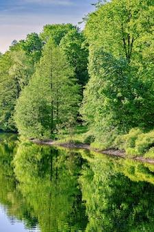 Naturalny krajobraz drzew odbijających się w wodzie leśnego jeziora