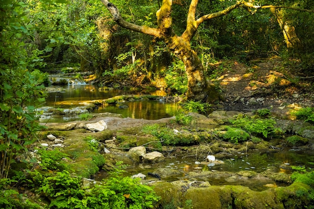 Naturalny krajobraz górskiej rzeki w dżungli.turcja