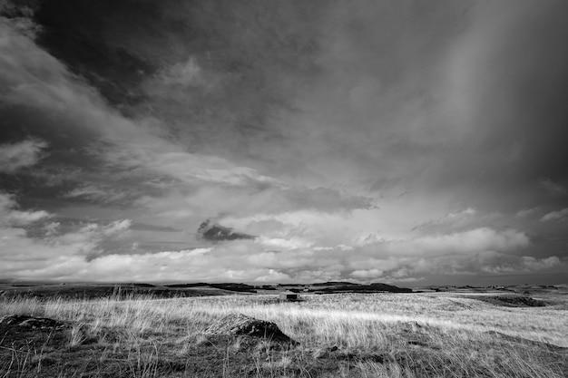 Naturalny krajobraz łąki
