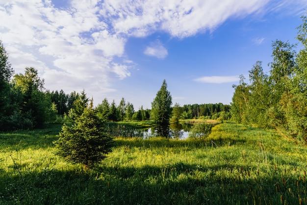 Naturalny krajobraz lato ze stawem pośrodku zielonego pola w lesie