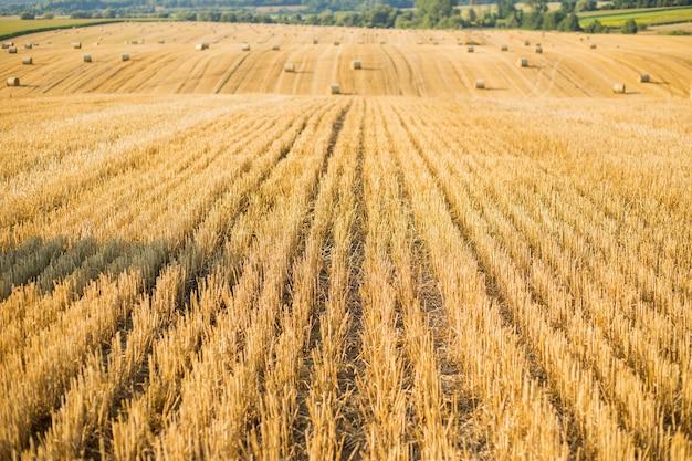 Naturalny krajobraz wsi. stogi siana w polu jesienią. pszenica żółte złote zbiory latem. bela siana