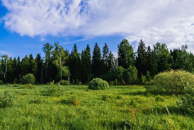 Naturalny krajobraz z lasem brzozy i jodły oraz zieloną łąką w letni dzień