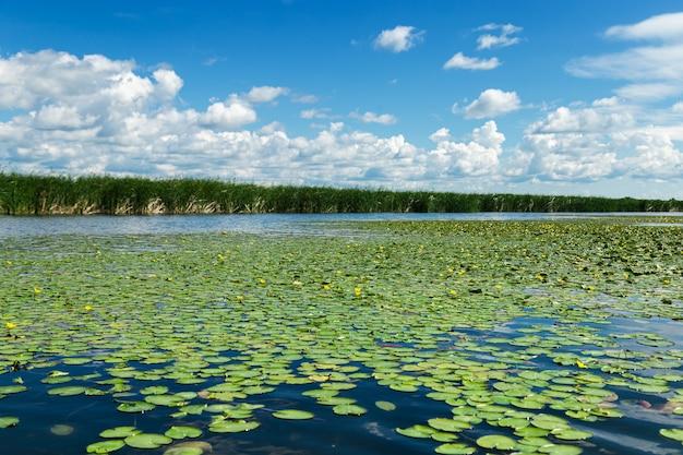Naturalny letni krajobraz z zieloną trawą jeziora i błękitnym niebem z chmurami