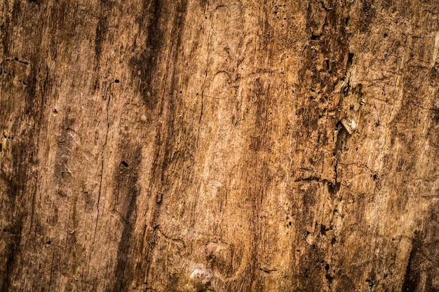 Naturalny piękny stary tekstura drewna, zbliżenie