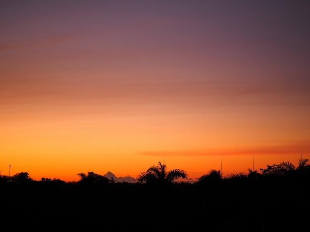 Naturalny piękny tropikalny zachód słońca z palmami sylwetka na horyzoncie.