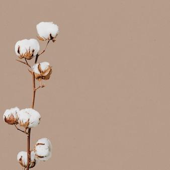 Naturalny suszony kwiat kwiatowy
