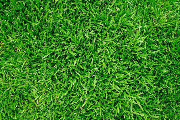 Naturalny zielonej trawy tło z rocznika filtrem