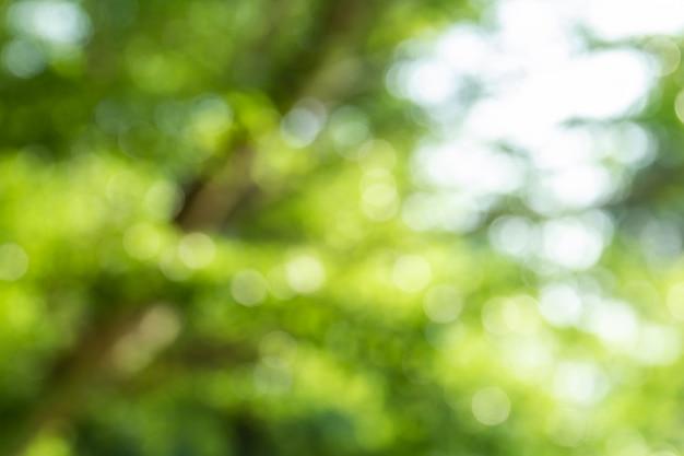 Naturalny zielony bokeh abstrakta tło