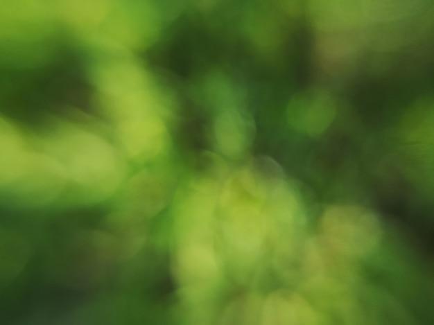 Naturalny zielony niewyraźne tło bokeh