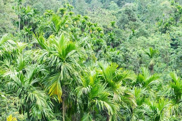 Natury tło z palmowymi dżungli kokosowymi drzewami i krzakami