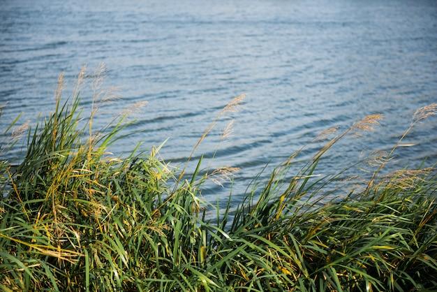 Natury tło z przybrzeżną trzciną i olśniewającą jezioro wodą