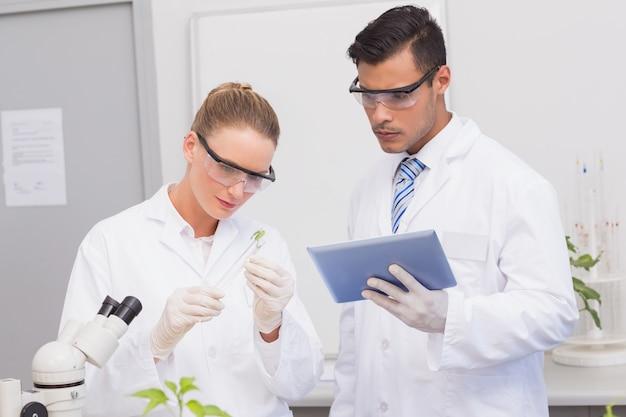 Naukowcy badający liść roślin