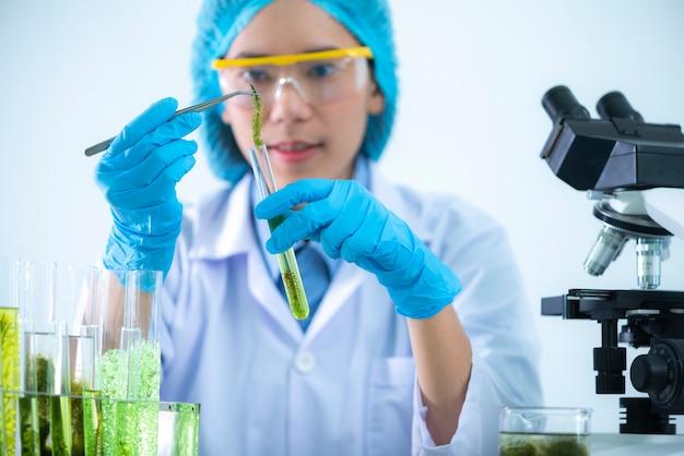 Naukowcy opracowują badania nad glonami.