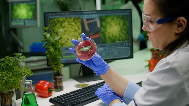 Naukowiec chemik trzymający w rękach szalkę petriego z wegańskim mięsem podczas wpisywania mutacji genetycznej na komputerze. naukowiec badający żywność genetycznie modyfikowaną substancją chemiczną działającą w m