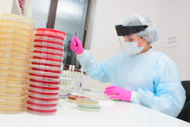 Naukowiec napełnia szalkę petriego warstwą pożywki i hoduje kolonie mikroorganizmów. laboratorium bakteriologiczne, analiza bakterii