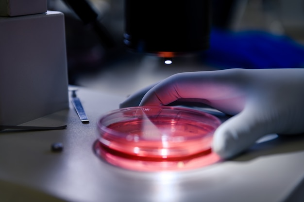 Naukowiec posługujący się lekkim mikroskopem stereoskopowym bada kulturę na płytce petriego w celu przeprowadzenia badań w dziedzinie biologii.