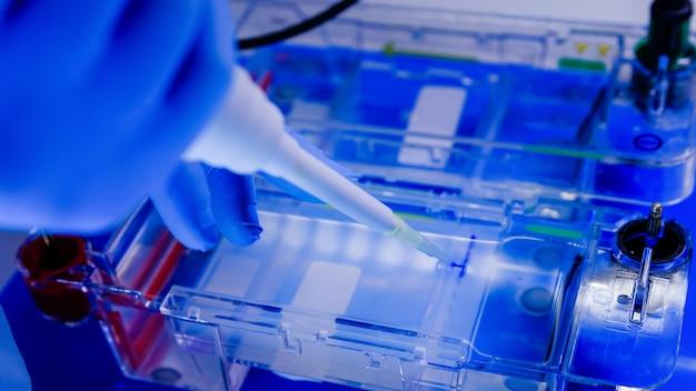 Naukowiec przeprowadzający biologiczny proces elektroforezy żelowej w ramach badań