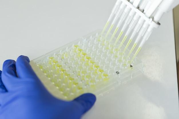 Naukowiec za pomocą pipety wielokanałowej i płytki multpellera eppendorf