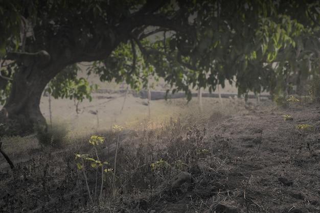 Nawiedzony las z mgłą i dramatyczne tło sceny. koncepcja halloween