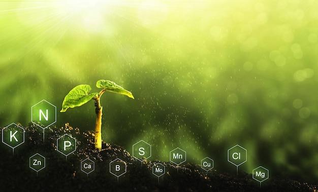 Nawożenie i rola składników odżywczych w życiu roślin z cyfrową ikoną składników mineralnych.