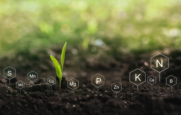 Nawożenie i rola składników pokarmowych w życiu roślin. gleba z ikoną cyfrowych mineralnych składników odżywczych.