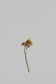 Neutralna kompozycja kwiatowa z suchą gałązką kwiatu na szaro
