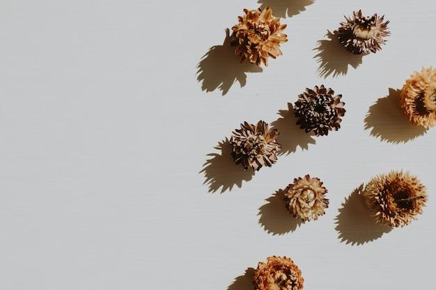 Neutralna kompozycja kwiatowa z suchymi pąkami kwiatowymi na szarym tle
