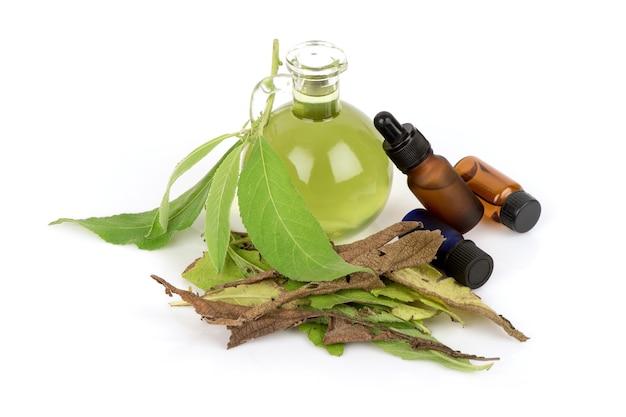 Ngai camphor tree, zielone liście i ekstrakt w butelce na białym tle.