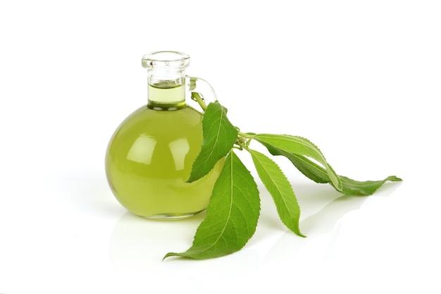 Ngai camphor tree zielone liście i olej na białym tle.