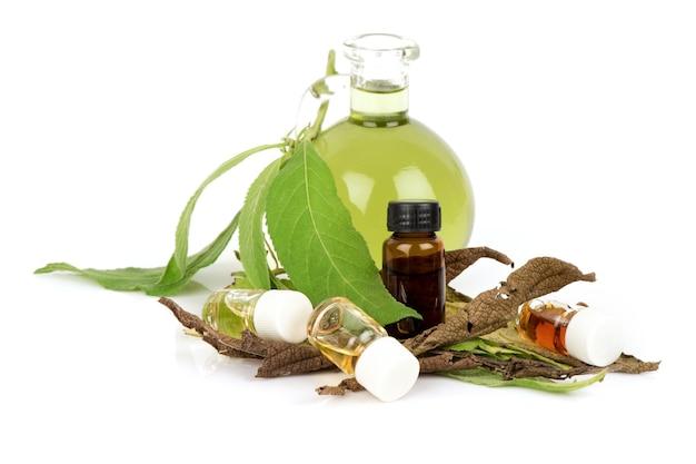 Ngai camphor tree zielone liście i perfumy na białym tle.