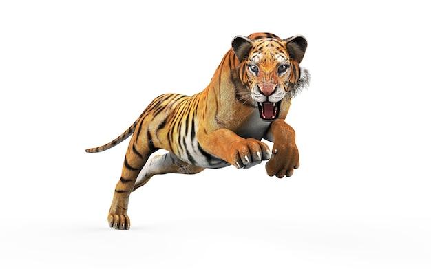 Niebezpieczny bengalia tygrys odizolowywający na białym tle z ścinek ścieżką