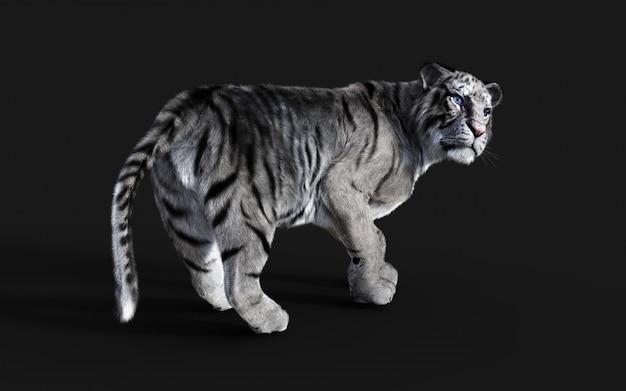 Niebezpieczny biały tygrys bengalski na białym tle na ciemnym tle ze ścieżką przycinającą, ilustracja 3d.
