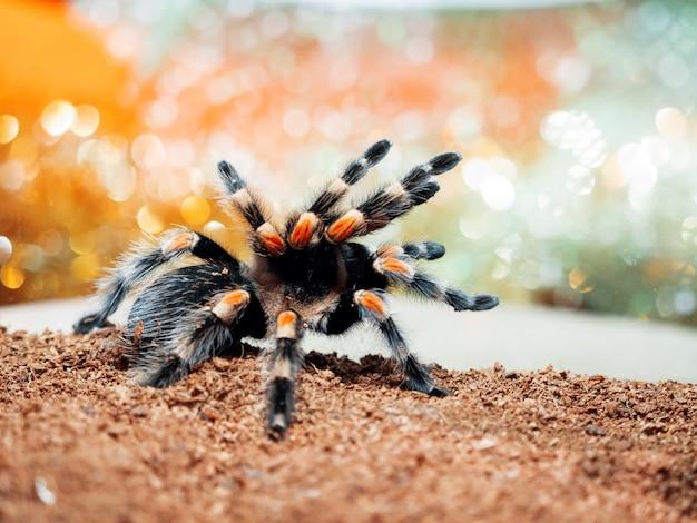 Niebezpieczny owad w specjalnym terrarium.