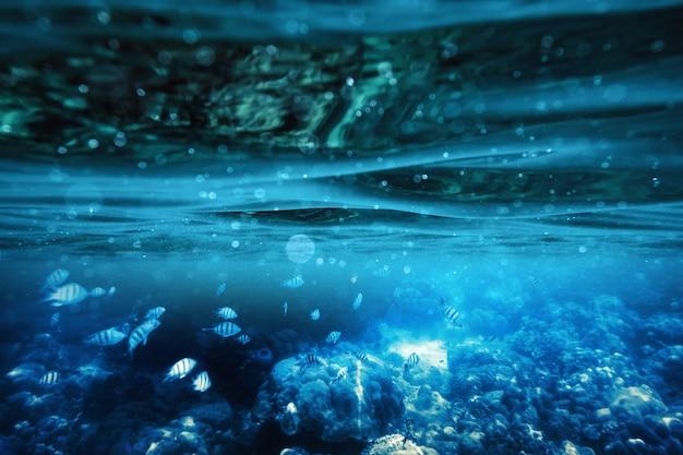 Niebieska fala pod wodą w tropikalnym morzu z rybami na rafie koralowej