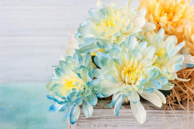 Niebieska i żółta chryzantema w białym drewnianym pudełku