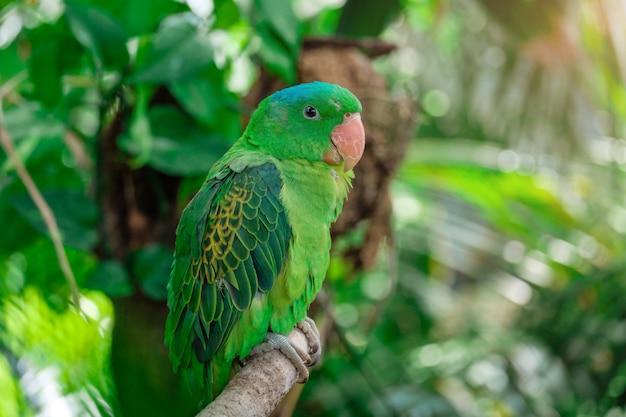 Niebieska koronowana zielona papuga siedzi na gałęzi.