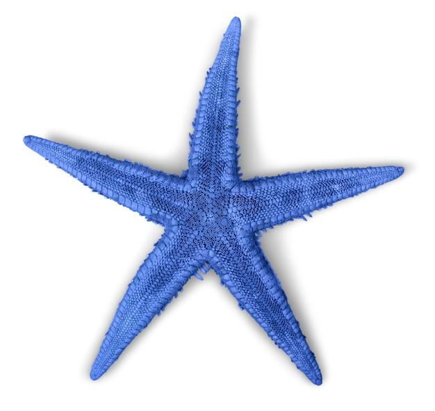 Niebieska rozgwiazda na białym tle