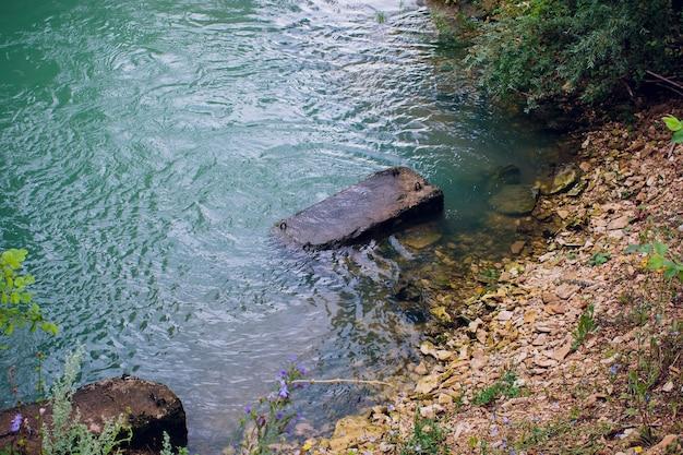 Niebieska woda w leśnym jeziorze z sosnami.