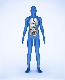 Niebieski cyfrowy człowiek z widocznymi narządami